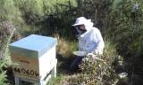 apiculture1-sanguinet-852126