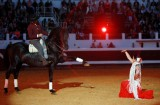 chevaux-passions-sud-852131