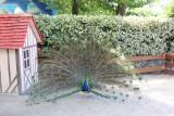 la-coccinelle-parc-animalier-2555580