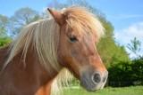 poney-balade-1758502
