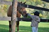 poney-enfant-1758503