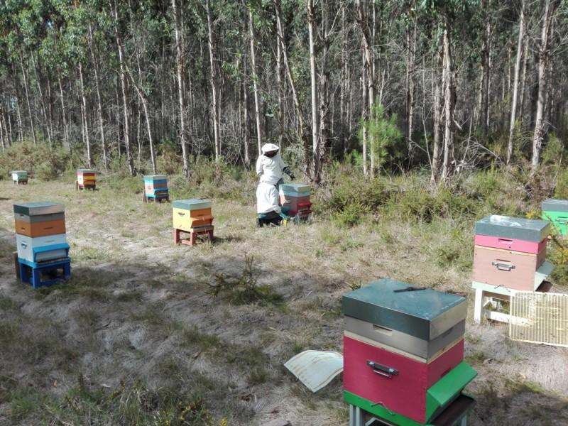 apiculture2-sanguinet-852127