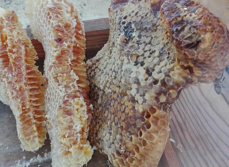 apiculture3-sanguinet-852125