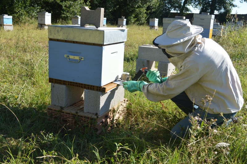 insect-invertebrate-beekeeper-bee-beehive-apiary-498005-pxhere.com