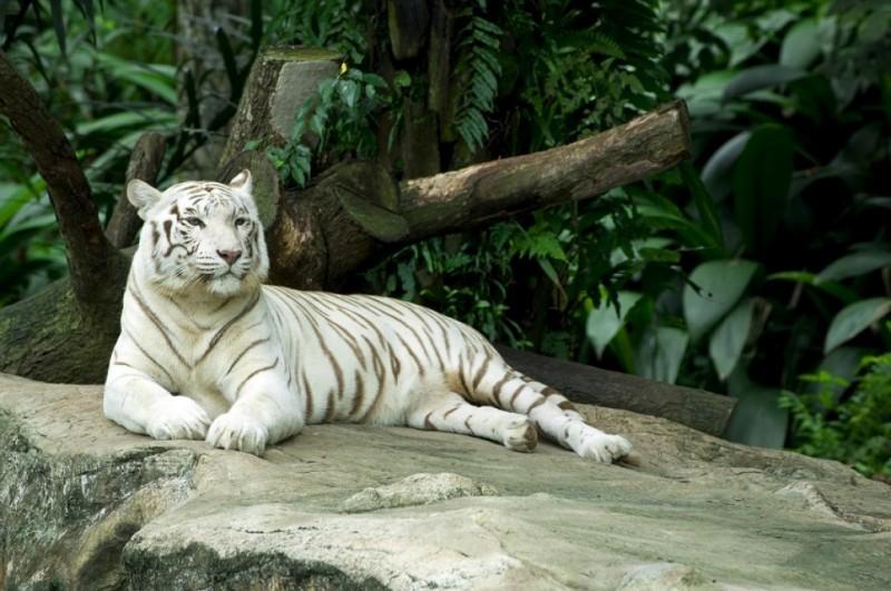 zoo-bassin-arcachon-1-15