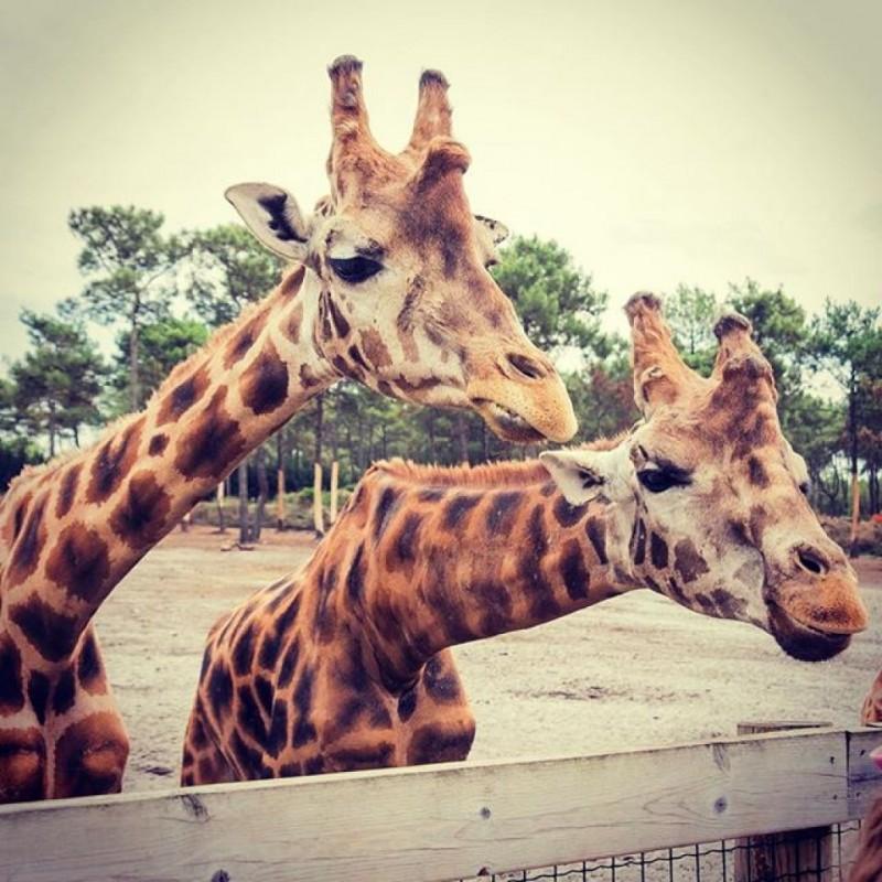 zoo-bassin-arcachon-10-19